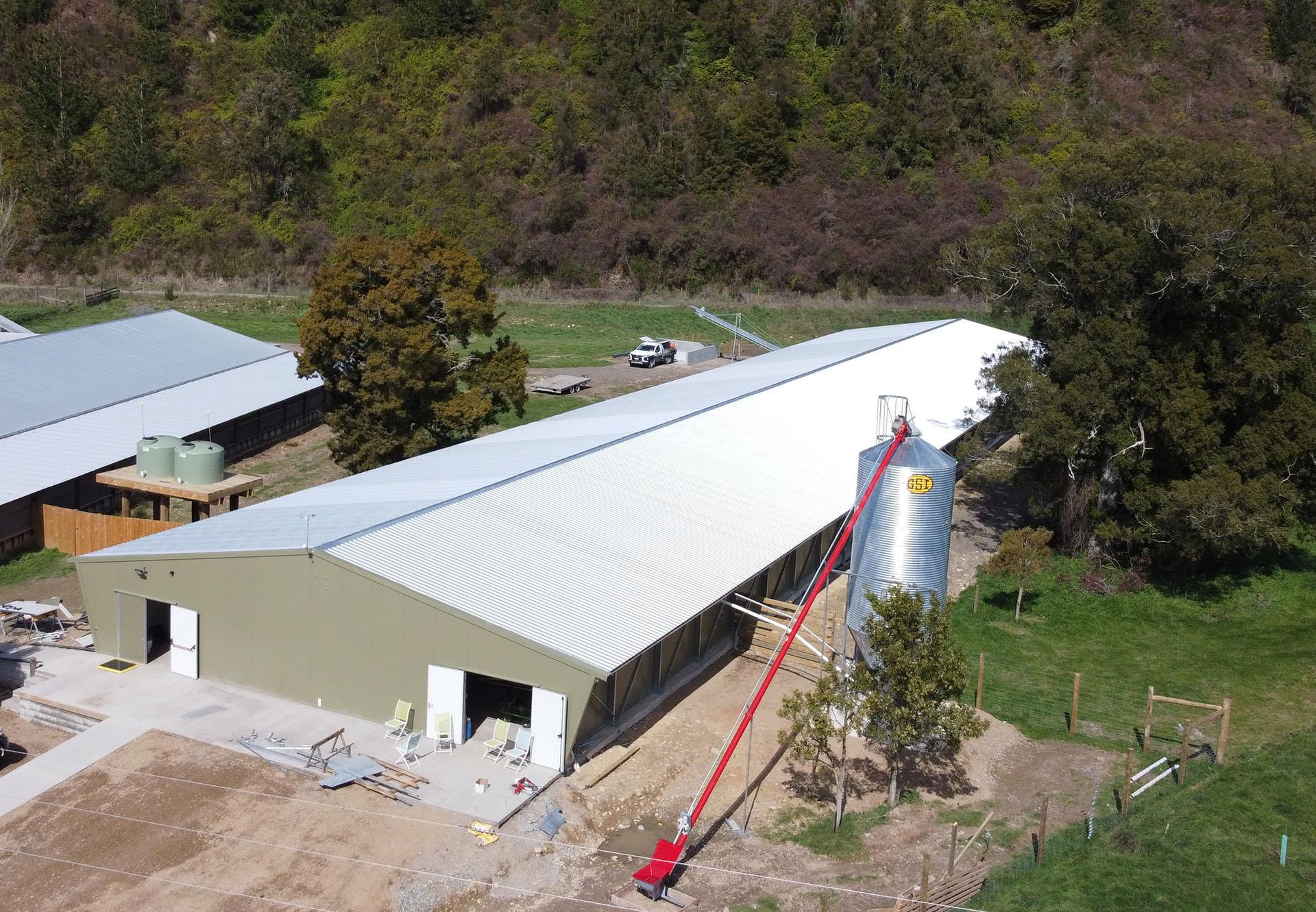 在新西蘭,EWING Poultry Farm 禽類農場到現代設施的過渡