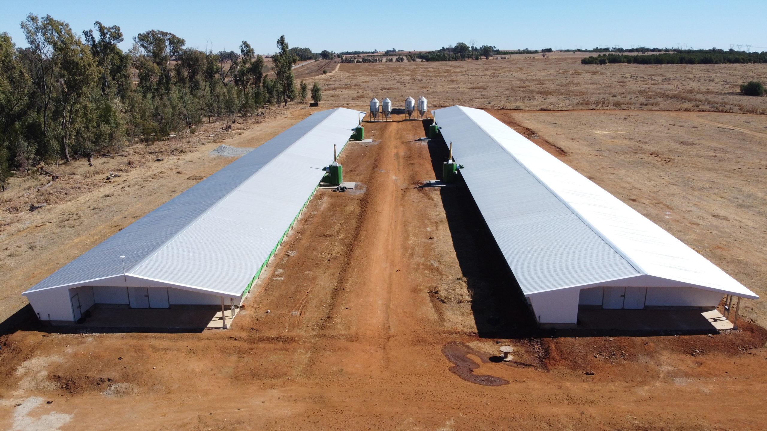 Un investissement prometteur dans le domaine avicole en Afrique du Sud: l'histoire du cas Oron Trading